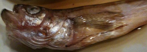 ハタハタ ☆秋田を代表する魚で有名。炭火で香ばしく。